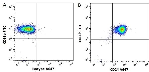 Anti Human CD24 Antibody, clone SN3 thumbnail image 3