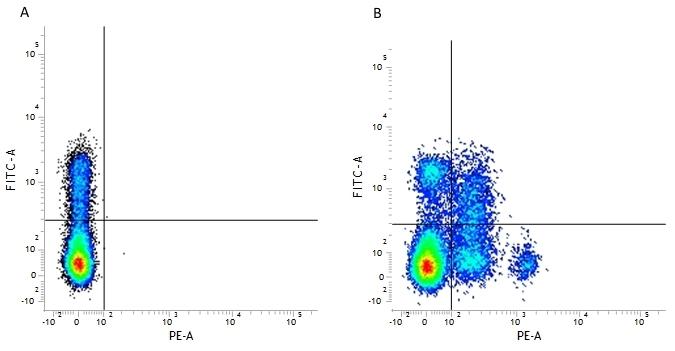 Anti Human CD244 Antibody, clone 2B4.69 thumbnail image 2
