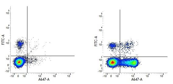 Anti Human CD27 Antibody, clone LT27 thumbnail image 1