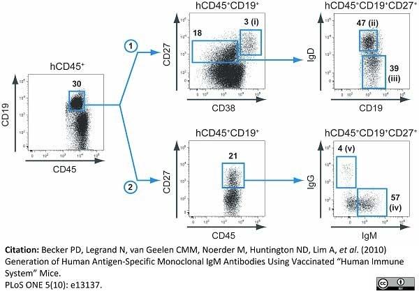 Anti Human CD27 Antibody, clone LT27 thumbnail image 2