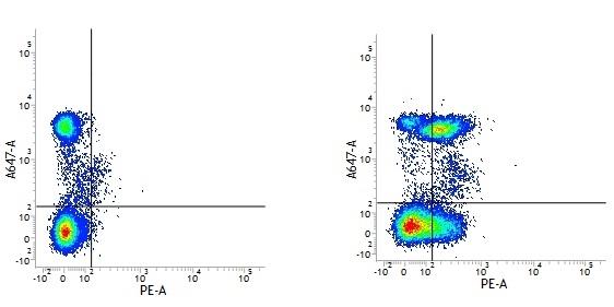 Anti Human CD28 Antibody, clone YTH913.12 gallery image 1