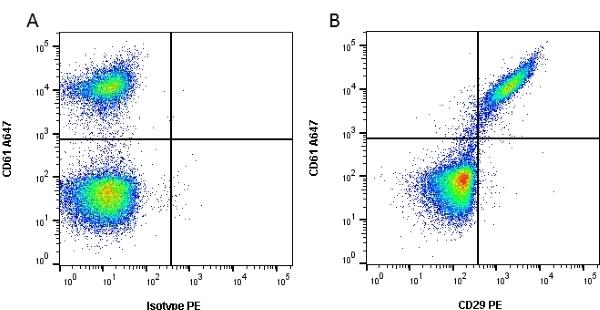 Anti Human CD29 Antibody, clone 12G10 thumbnail image 3