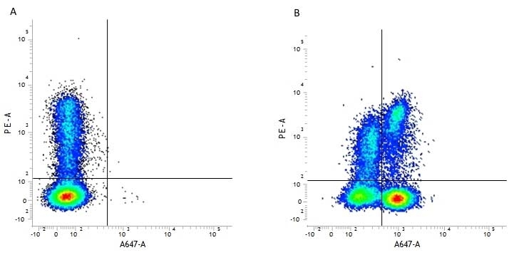 Anti Human CD3 Antibody, clone CD3-12 thumbnail image 1