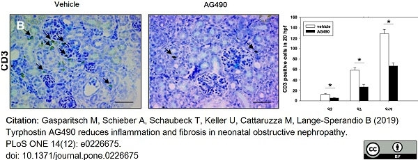 Anti Human CD3 Antibody, clone CD3-12 thumbnail image 13