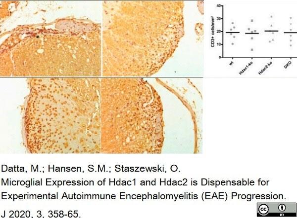 Anti Human CD3 Antibody, clone CD3-12 thumbnail image 14