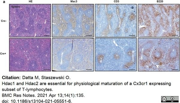 Anti Human CD3 Antibody, clone CD3-12 thumbnail image 21