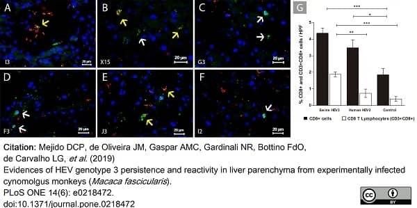 Anti Human CD3 Antibody, clone CD3-12 thumbnail image 26