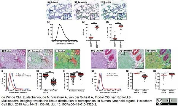 Anti Human CD3 Antibody, clone CD3-12 thumbnail image 7