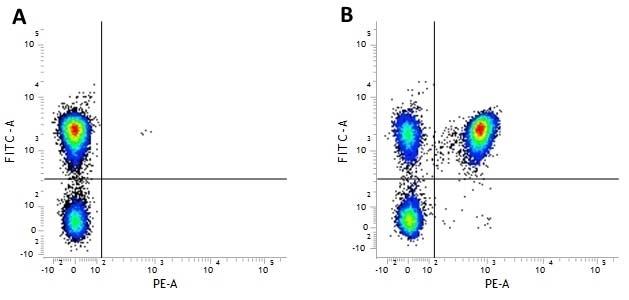 Anti Human CD3 Antibody, clone MEM-57 gallery image 1