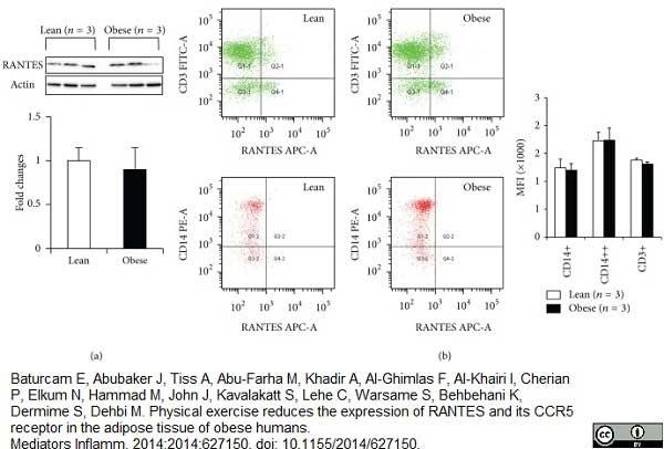 Anti Human CD3 Antibody, clone UCHT1 thumbnail image 10