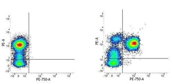 Anti Human CD3 Antibody, clone UCHT1 thumbnail image 13