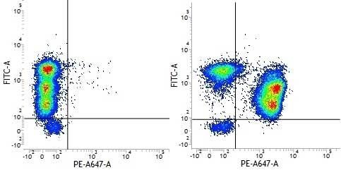 Anti Human CD3 Antibody, clone UCHT1 thumbnail image 16