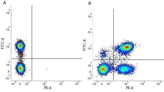Anti Human CD3 Antibody, clone UCHT1 thumbnail image 17