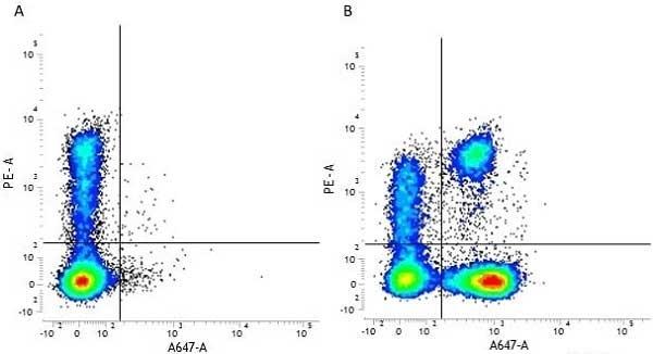 Anti Human CD3 Antibody, clone UCHT1 thumbnail image 18
