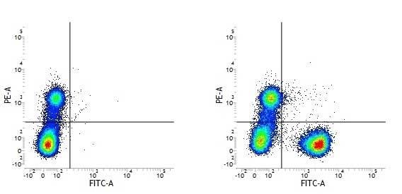 Anti Human CD3 Antibody, clone UCHT1 thumbnail image 19
