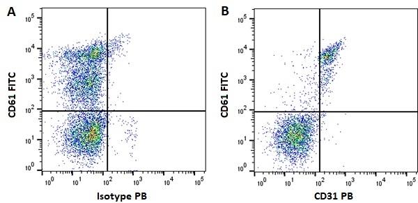 Anti Human CD31 Antibody, clone WM59 thumbnail image 11