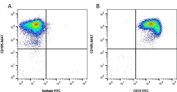 Anti Human CD31 Antibody, clone WM59 thumbnail image 3