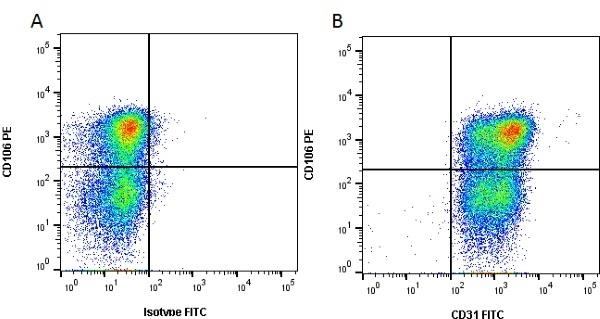 Anti Human CD31 Antibody, clone WM59 thumbnail image 4