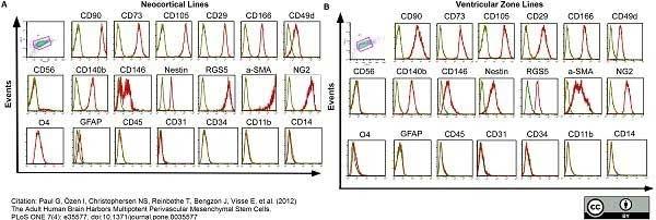 Anti Human CD31 Antibody, clone WM59 thumbnail image 6