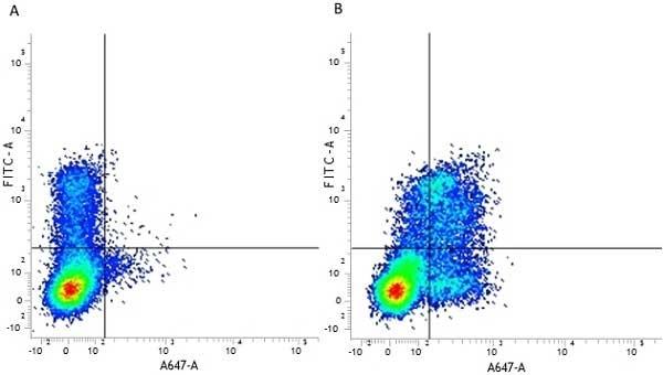 Anti Human CD314 Antibody, clone 1D11 thumbnail image 6