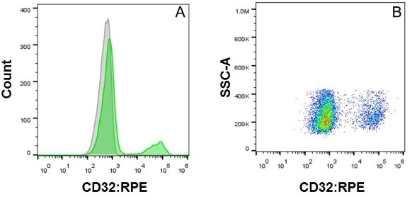Anti Human CD32 Antibody, clone AT10 thumbnail image 7