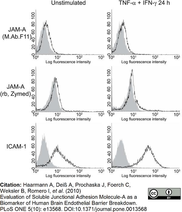 Anti Human CD321 Antibody, clone M.Ab.F11 thumbnail image 2