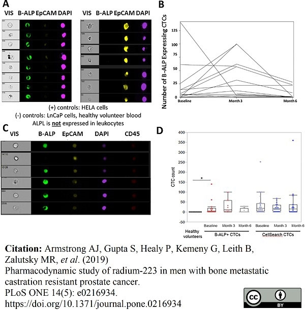 Anti Human CD326 Antibody, clone VU-1D9 thumbnail image 3