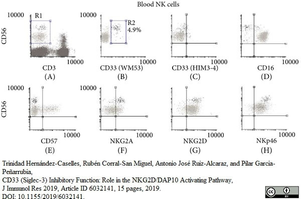 Anti Human CD33 Antibody, clone WM53 thumbnail image 3