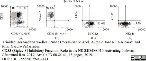 Anti Human CD33 Antibody, clone WM53 thumbnail image 5