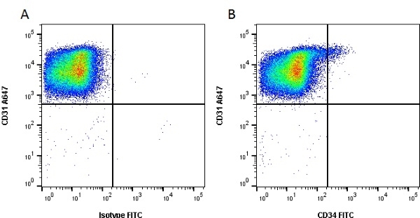 Anti Human CD34 Antibody, clone QBEND/10 thumbnail image 2