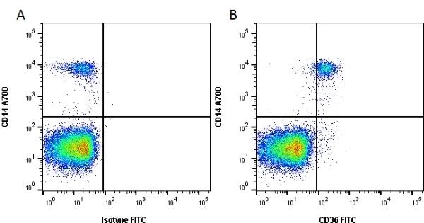 Anti Human CD36 Antibody, clone SMØ thumbnail image 1