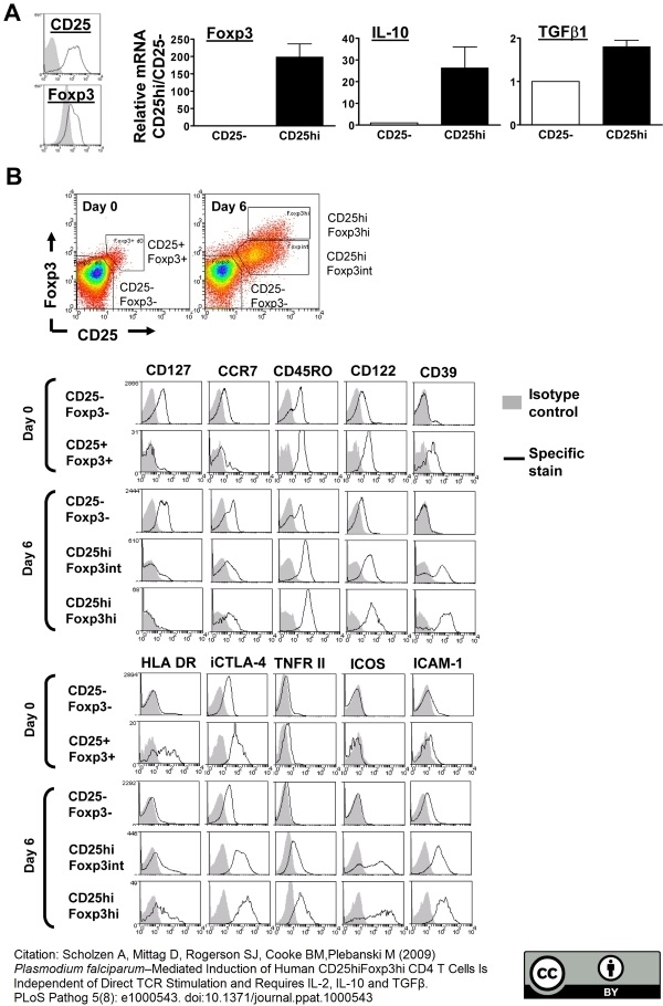 Anti Human CD39 Antibody, clone A1 thumbnail image 2