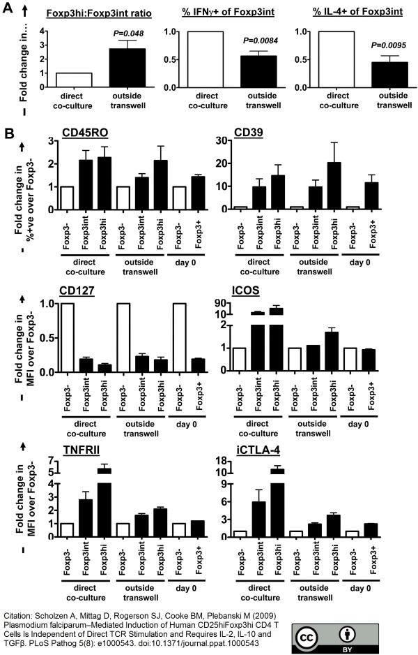Anti Human CD39 Antibody, clone A1 thumbnail image 3