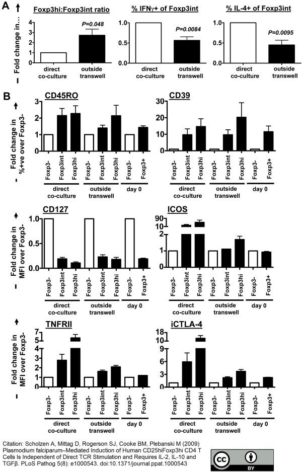 Anti Human CD39 Antibody, clone A1 thumbnail image 4