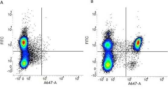 Anti Human CD4 Antibody, clone RPA-T4 thumbnail image 3