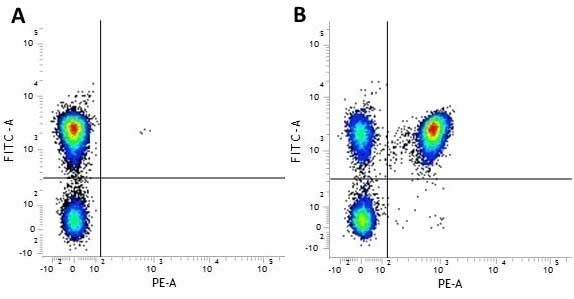 Anti Human CD4 Antibody, clone RPA-T4 thumbnail image 4