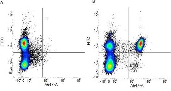 Anti Human CD4 Antibody, clone RPA-T4 thumbnail image 5