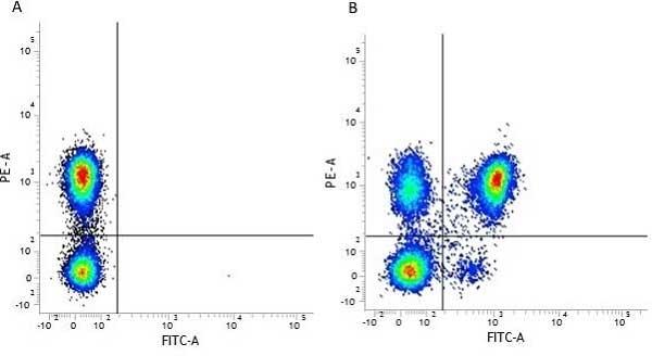 Anti Human CD4 Antibody, clone RPA-T4 thumbnail image 7
