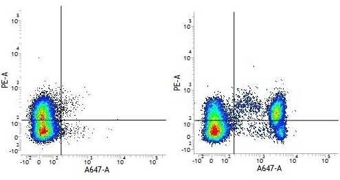 Anti Human CD4 Antibody, clone RPA-T4 thumbnail image 8