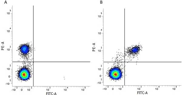 Anti Human CD40 Antibody, clone LOB7/6 thumbnail image 11