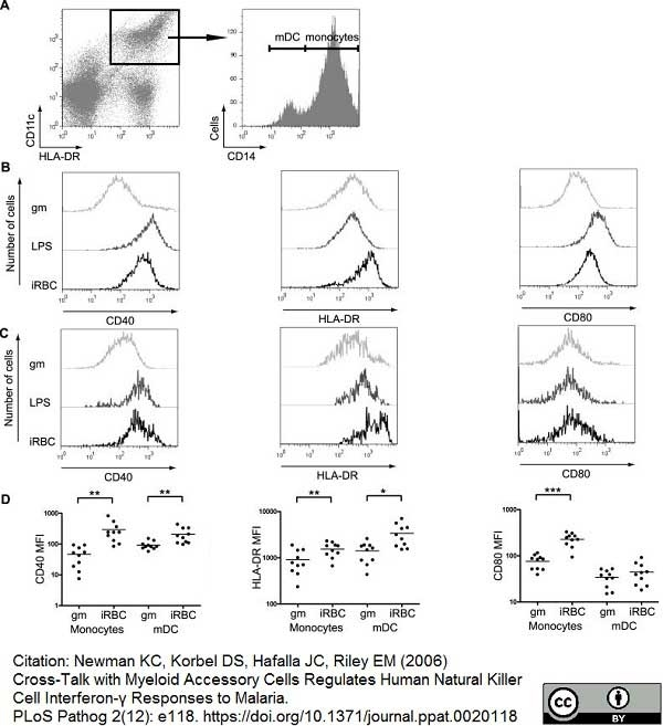 Anti Human CD40 Antibody, clone LOB7/6 thumbnail image 7