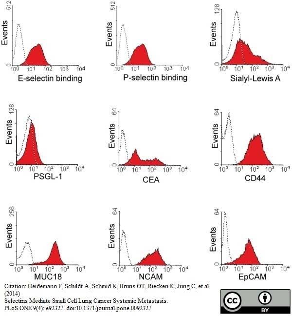 Anti Human CD44 Antibody, clone 156-3C11 thumbnail image 1