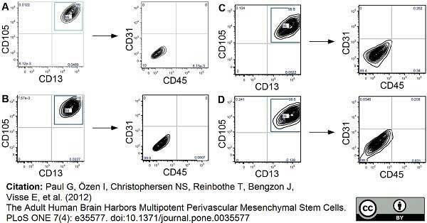 Anti Human CD45 Antibody, clone F10-89-4 thumbnail image 5