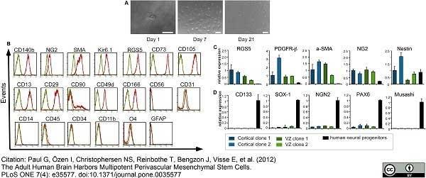 Anti Human CD45 Antibody, clone F10-89-4 thumbnail image 7