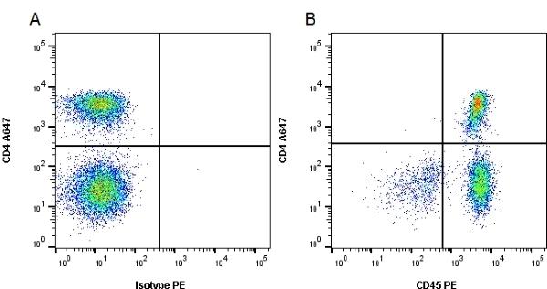 Anti Human CD45 Antibody, clone YTH24.5 thumbnail image 1