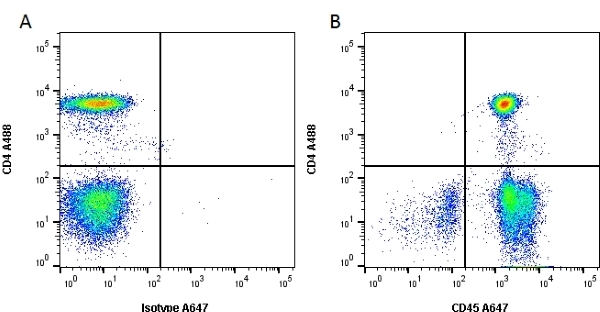 Anti Human CD45 Antibody, clone YTH24.5 thumbnail image 4