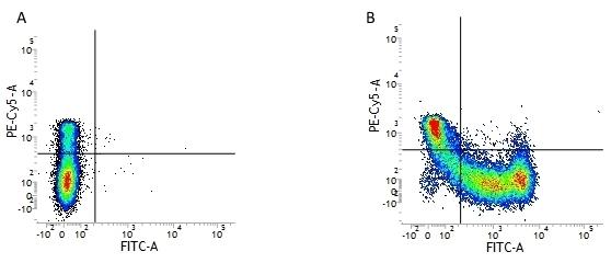 Anti Human CD45RA Antibody, clone F8-11-13 thumbnail image 1