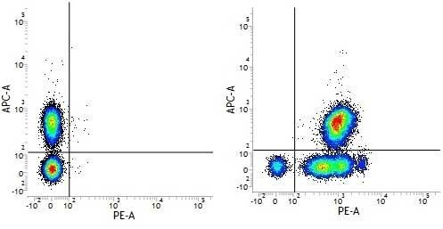 Anti Human CD46 Antibody, clone MEM-258 thumbnail image 1