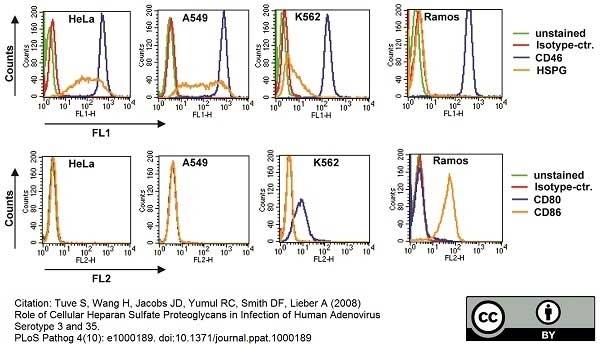 Anti Human CD46 Antibody, clone MEM-258 thumbnail image 3
