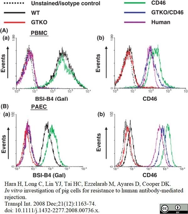 Anti Human CD46 Antibody, clone MEM-258 thumbnail image 4